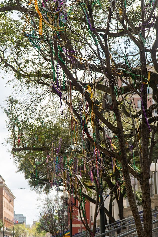 Tree Covered in Beads after mardi gras